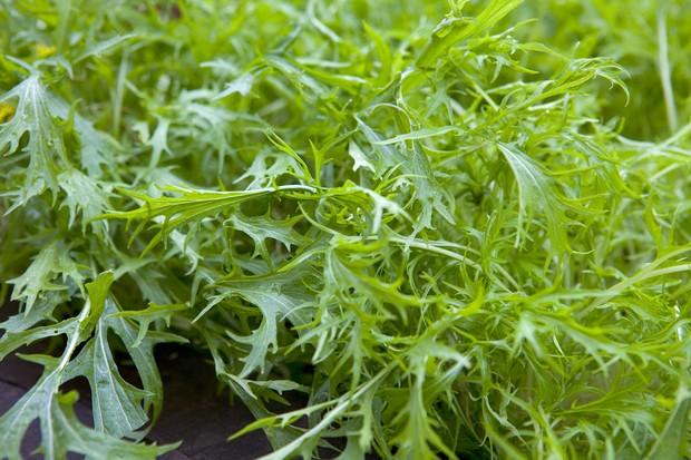 mizuna-leaves-6
