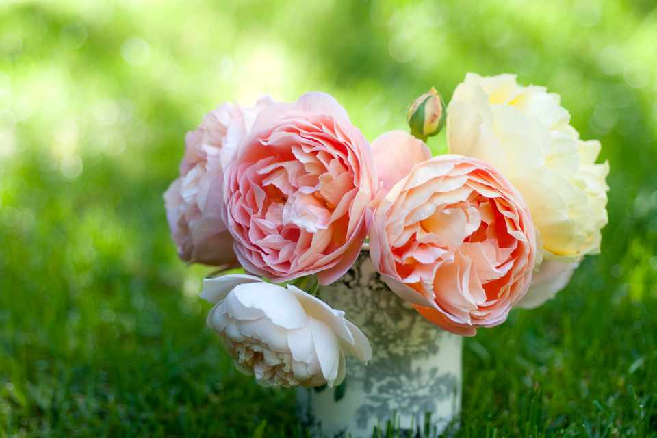 Favourite Roses for Cut Flowers. Photo: Getty Images.