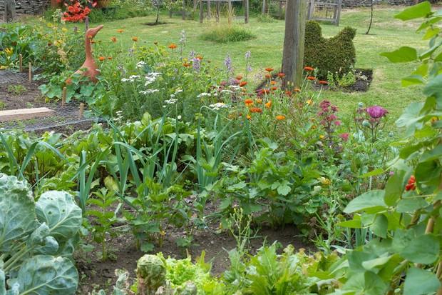 Wildflowers beside a veg patch