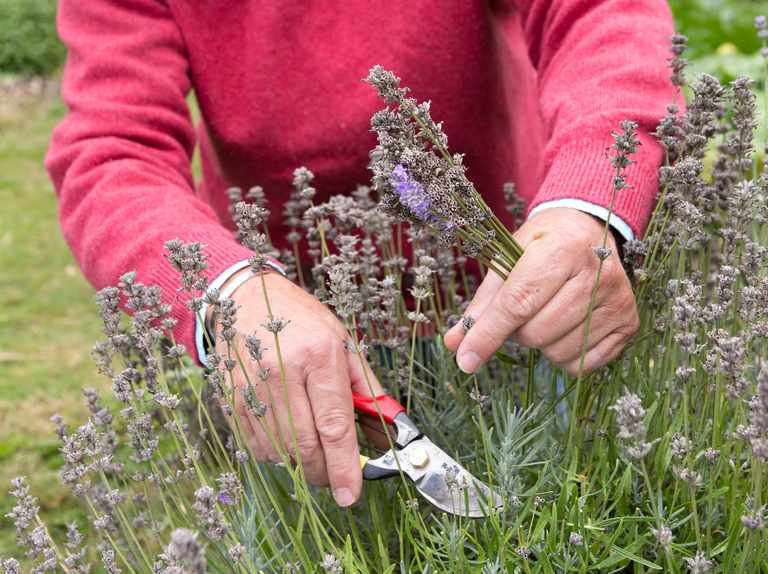 018c4f9daa50 Best Ways to Deadhead Flowers - BBC Gardeners' World Magazine