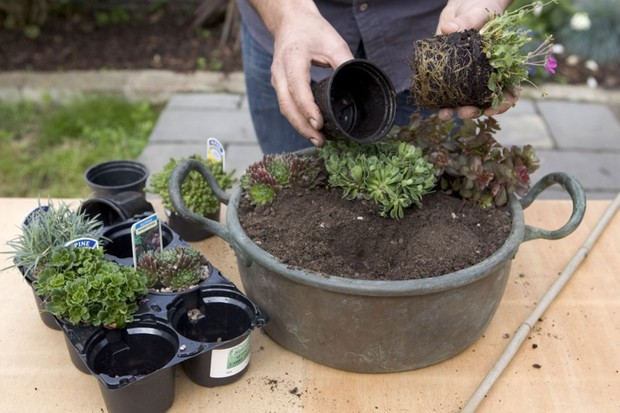 Alpine container - planting the succulents