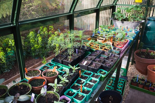 plants-and-seedlings-on-a-greenhouse-bench-3