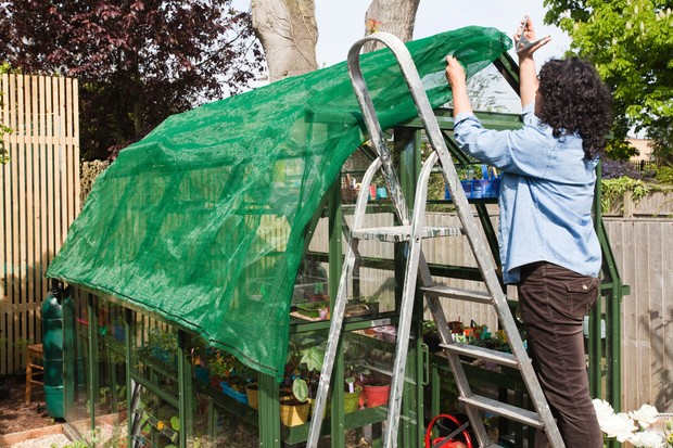 Prepare Your Greenhouse For Spring Bbc Gardeners World