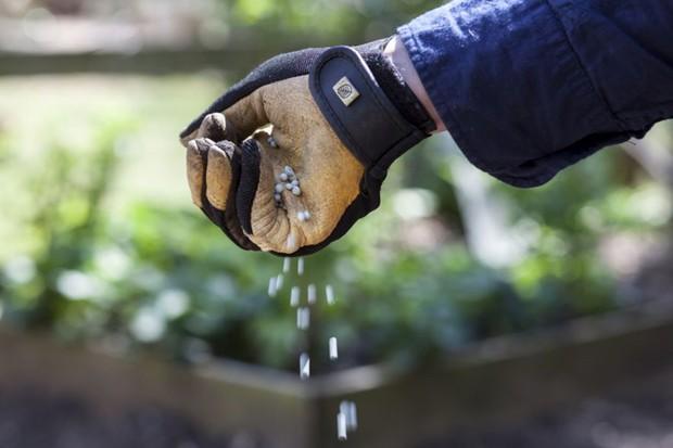 Feeding plants - using fertiliser granules