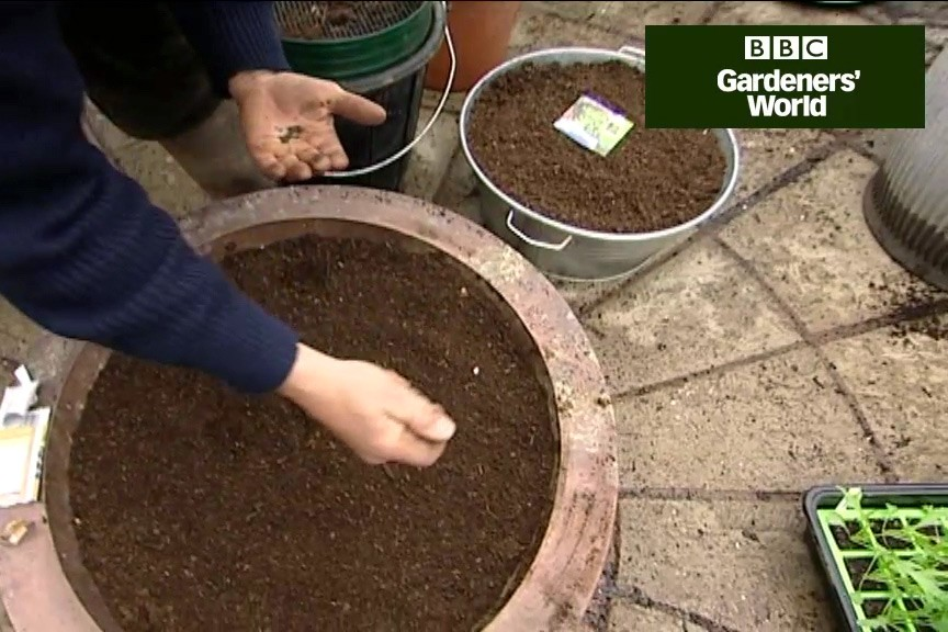 How to grow salad leaves in a container video