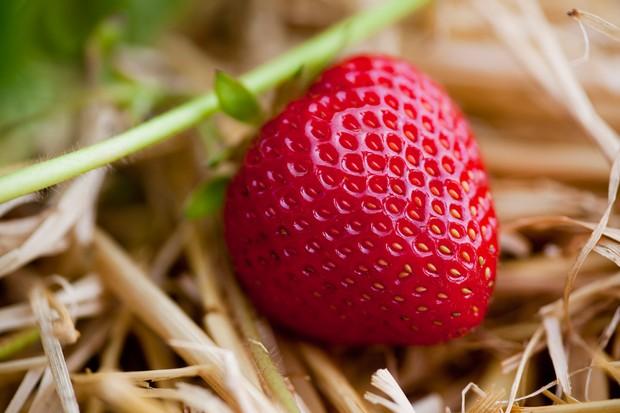 Mid-season Strawberry 'Hapil'