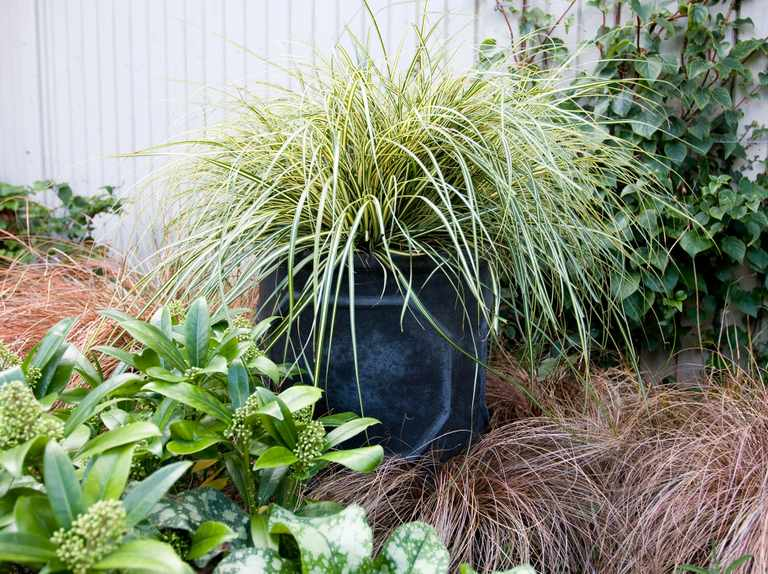 Four container ideas for shade