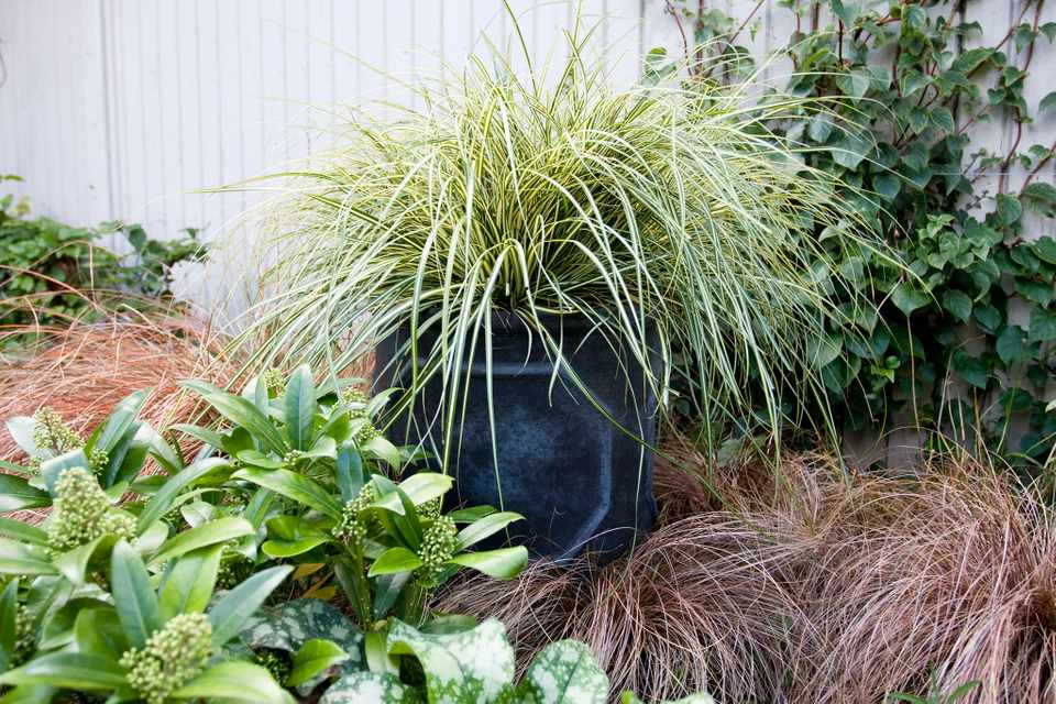 Container ideas for shade