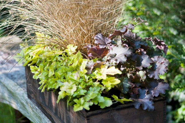 Container for shade with heucheras and carex