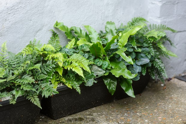 Container for shade planted up with ferns and cyclamen
