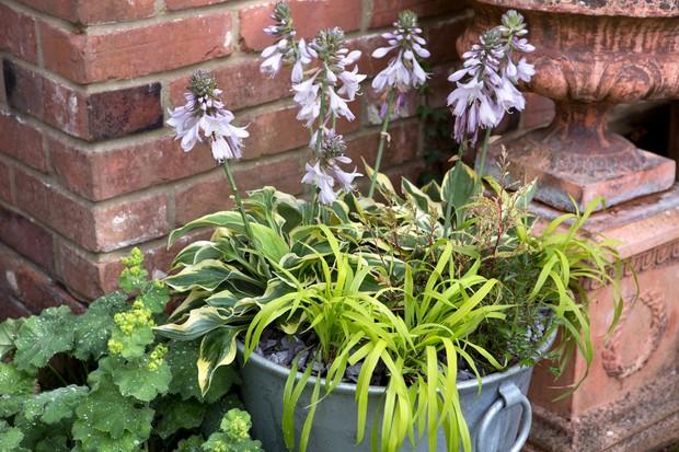 Shade-loving container planted with Hosta 'Wide Brim', Astilbe simplicifolia 'Sprite' and Millium effusum 'Aureum'