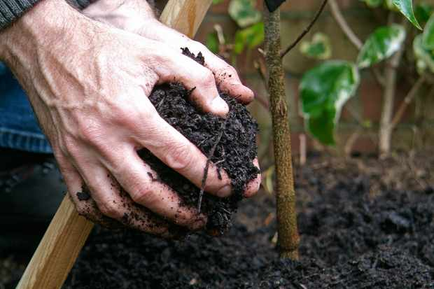 Gardening for beginners - how to plant