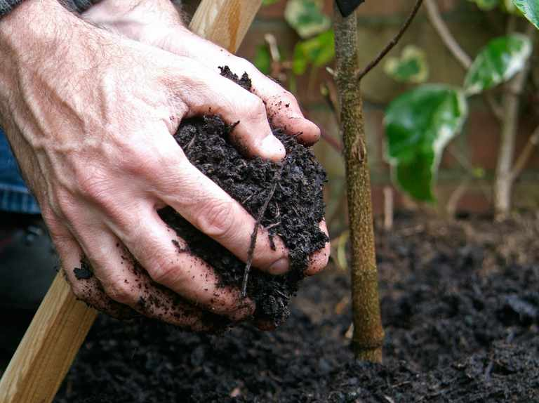 Gardening for beginners: how to plant