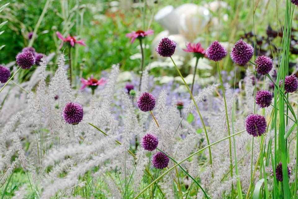 Grasses For Small Gardens Bbc Gardeners World Magazine