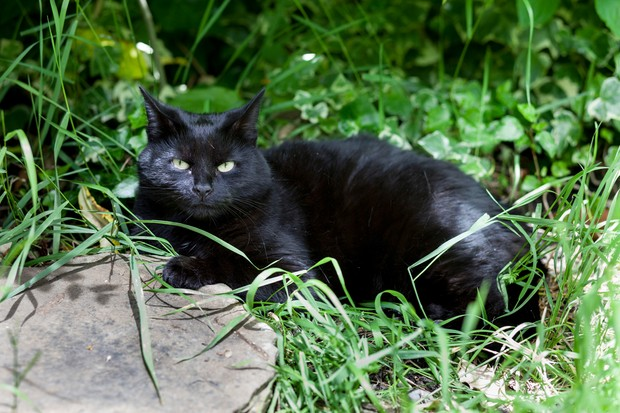 Black cat sitting in garden border