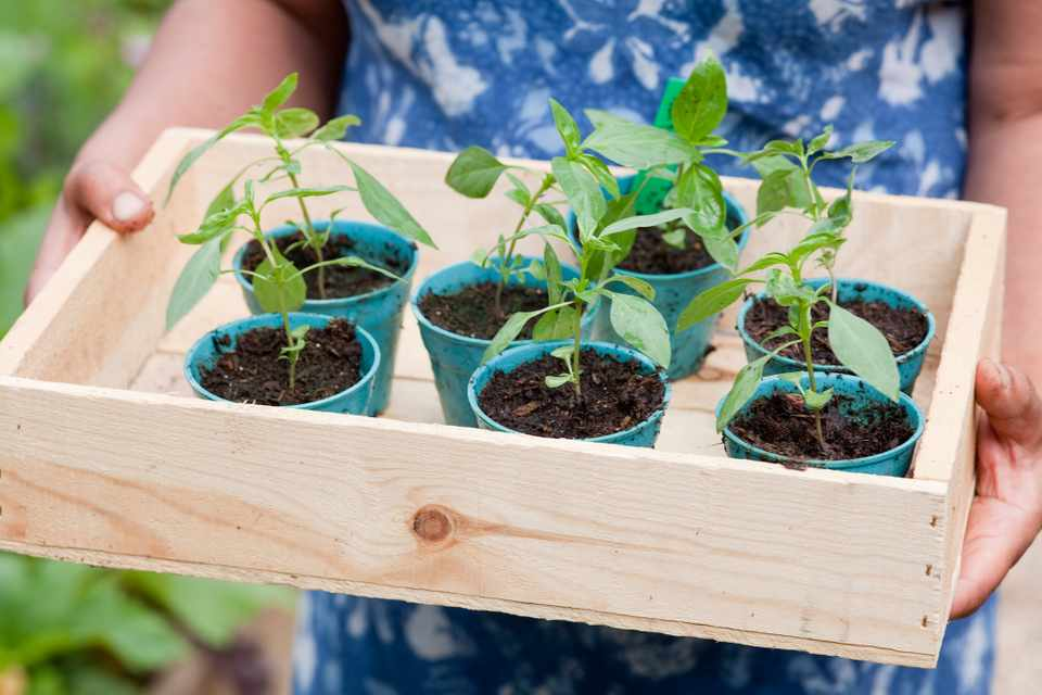 Seedlings in biodegradable bamboo plant pots