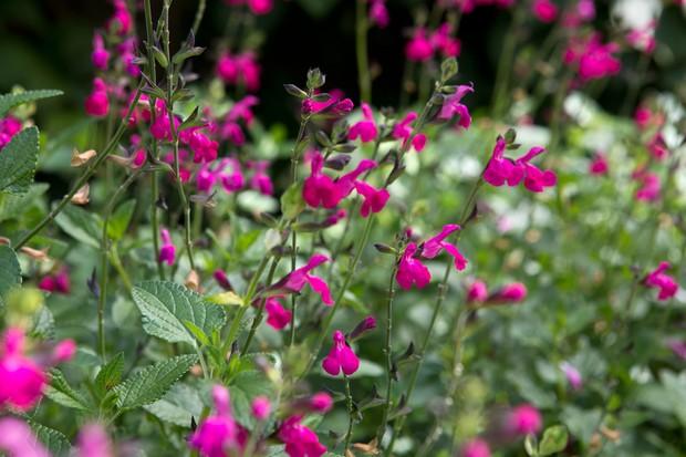 2048x1365-Plants-that-flower-all-summer-LI2630977