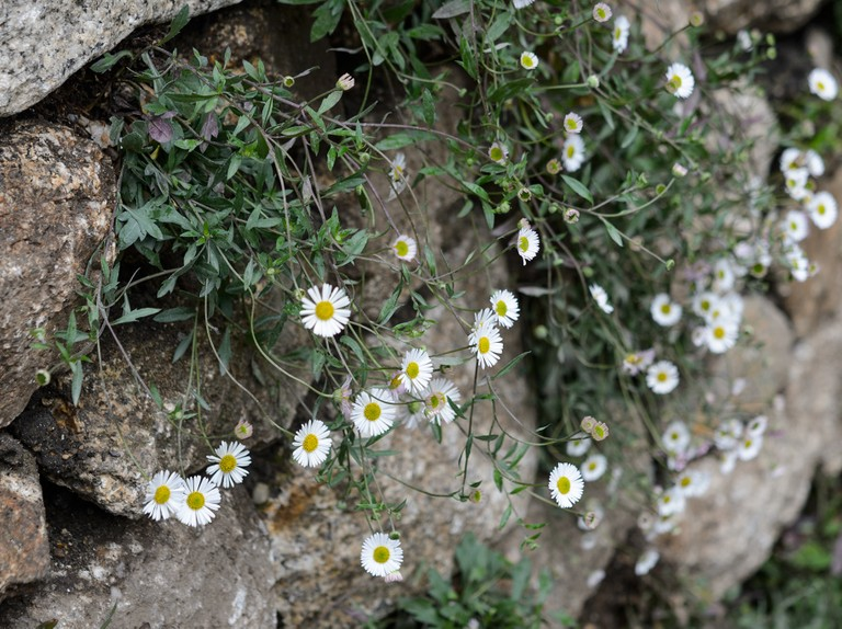 Eight Plants That Flower All Summer Bbc Gardeners World Magazine