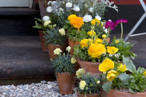 Potted plants in a front garden