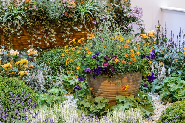 Potted plants among dense planting in a font garden