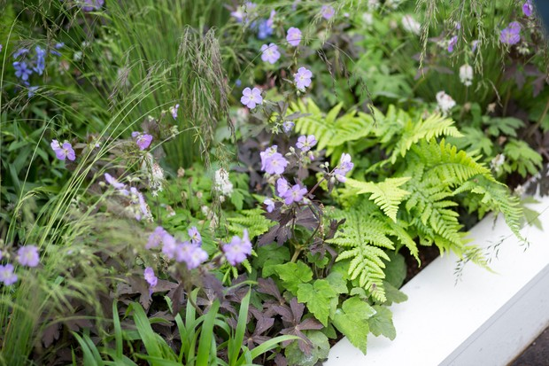 Plant combinations of fern and hardy geranium