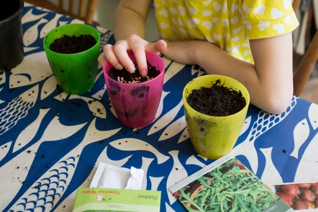Sowing seeds in pots of compost