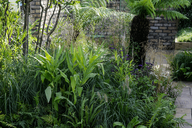 Hedychiums growing in a border