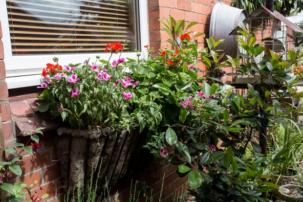 Window planter planted wih herbaceous plants