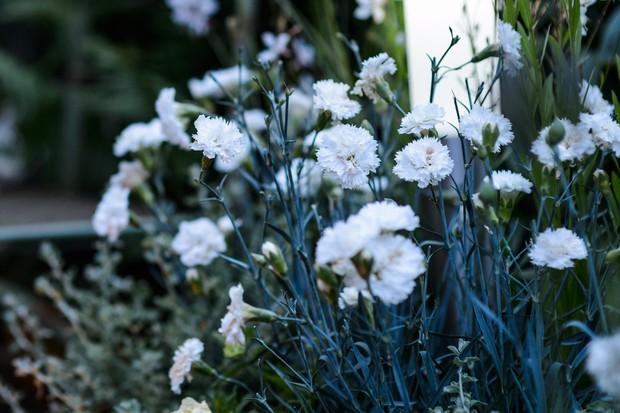 Dianthus 'Memories'