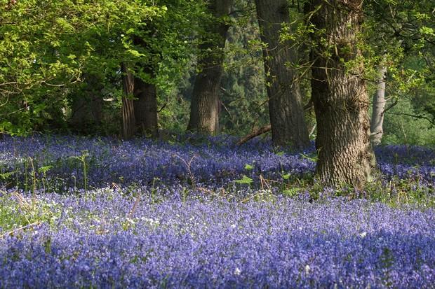 University of Oxford Harcourt Arboretum