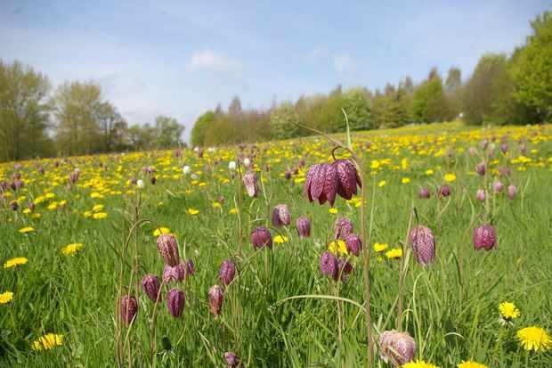 The Yorkshire Arboretum