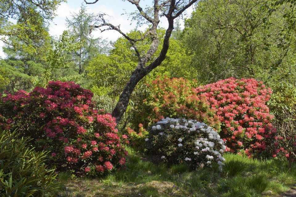 Angus's Garden