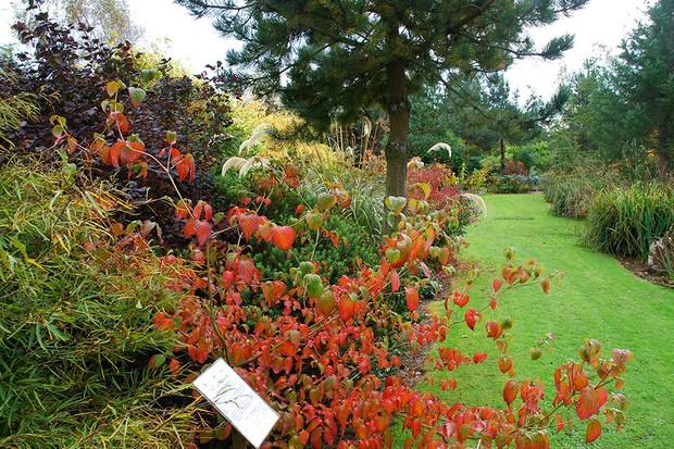 BlueBell Arboretum & Nursery