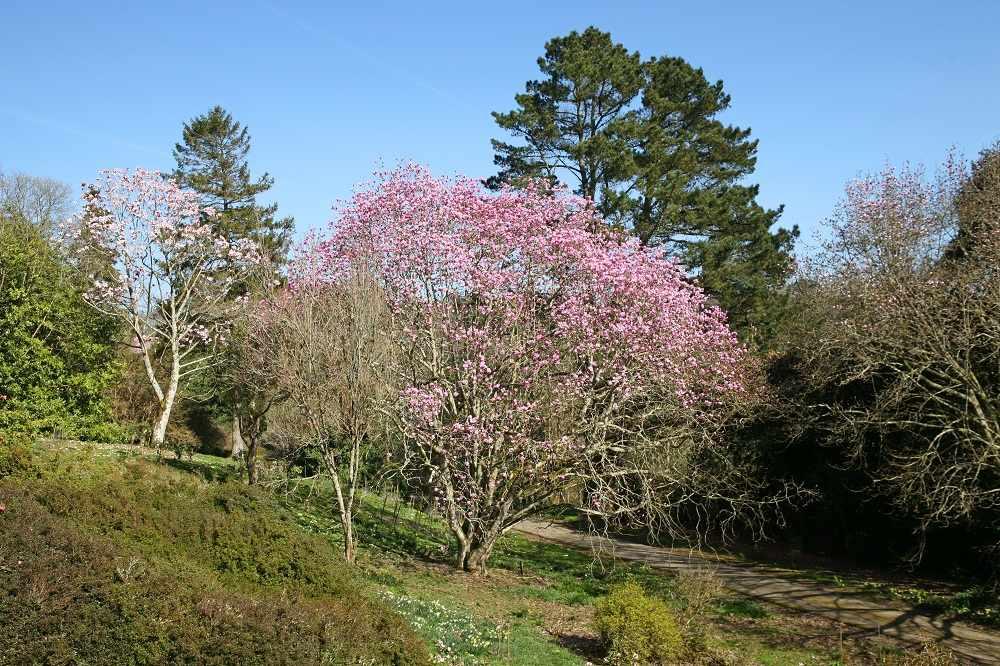 Caerhays Castle Gardens