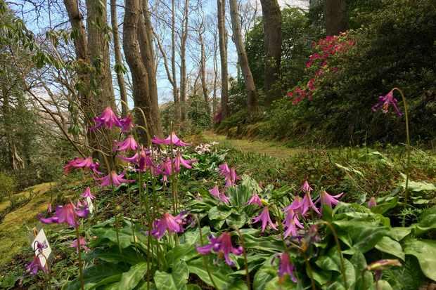 Greencombe Gardens