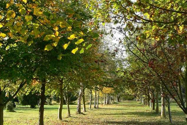 The Lovell Quinta Arboretum & Nature Reserve