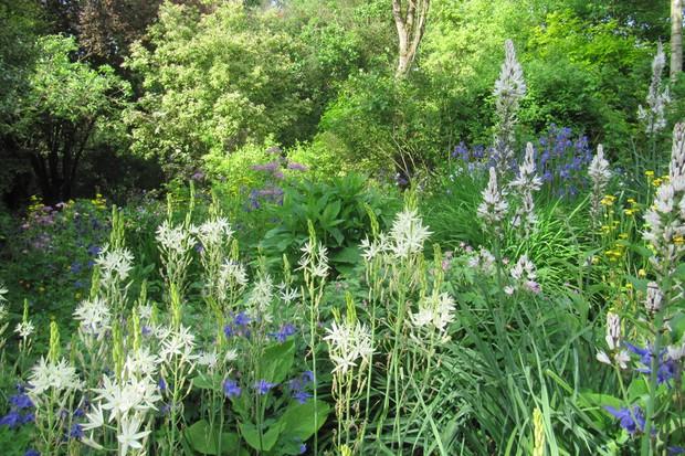 Moors Meadow Garden