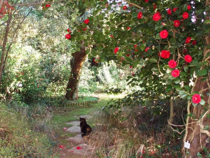 Moyclare Garden