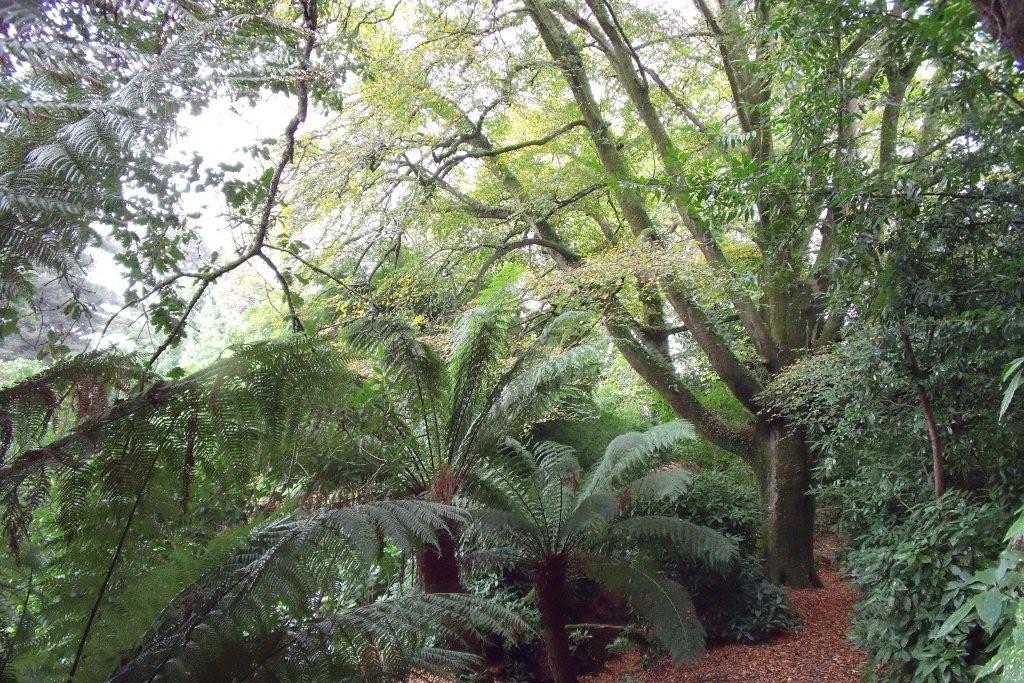 Penjerrick Garden
