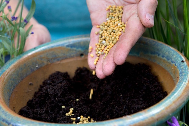 Adding slow-release fertiliser to compost, before planting.