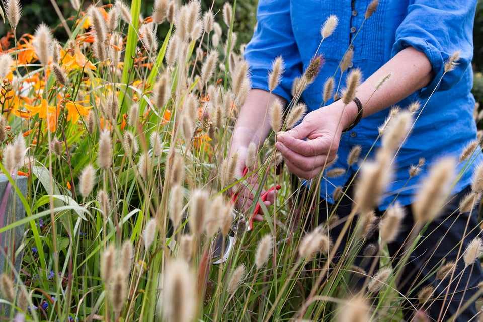 How to collect and save ornamental grass seed