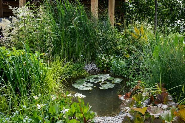 Garden wildlife pond
