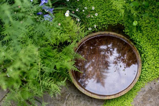 Reflective water bowl