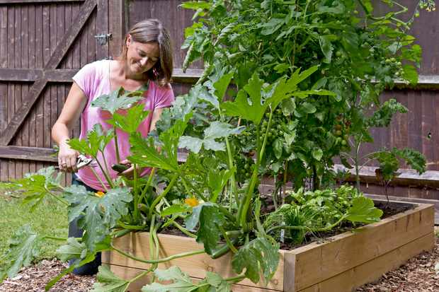 30-minute veg plot