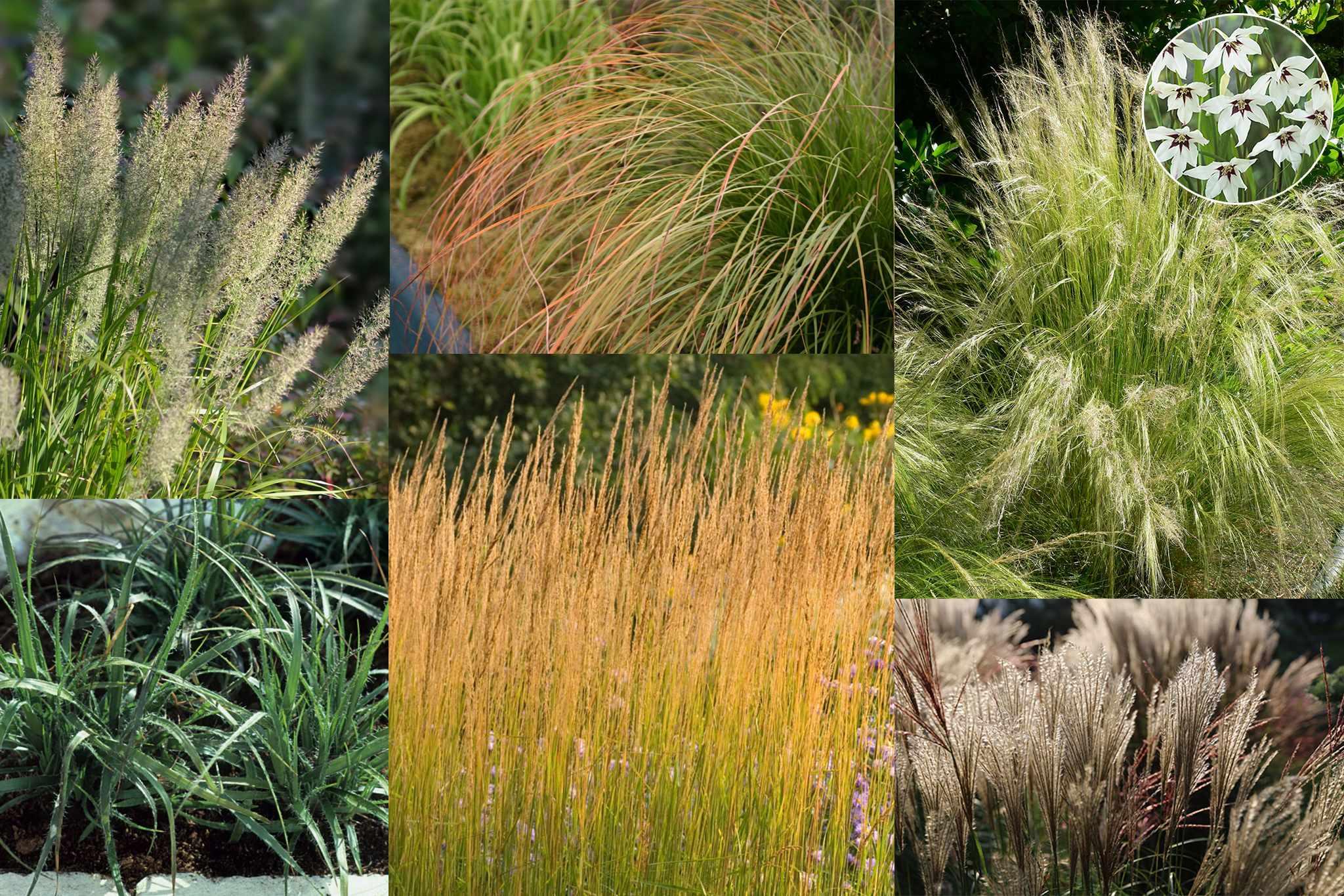 hayloft-grasses-half-price