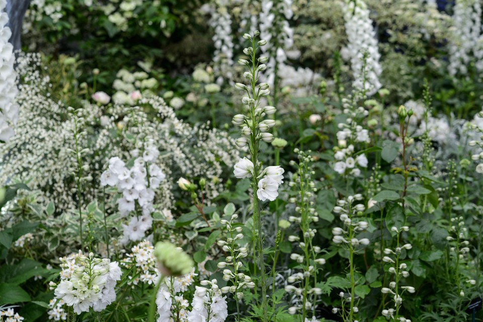 Plants For A White Border Bbc Gardeners World Magazine