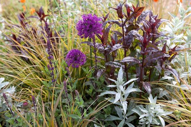 Allium, artemisia, carex and salvia