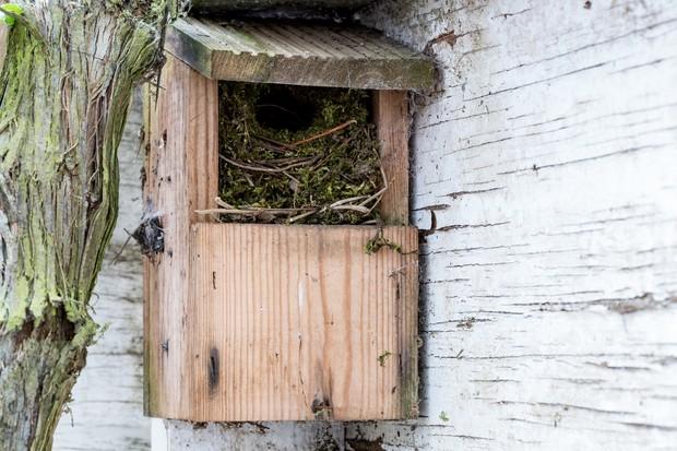Open-fronted bird box