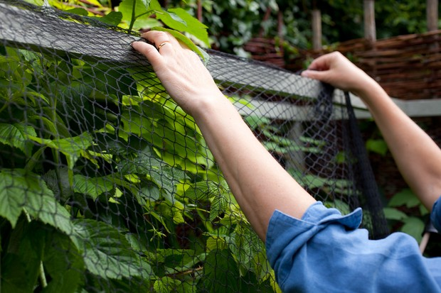 Netting a fruit cage
