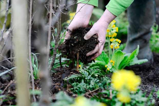How to plant a bare-root wildlife hedge